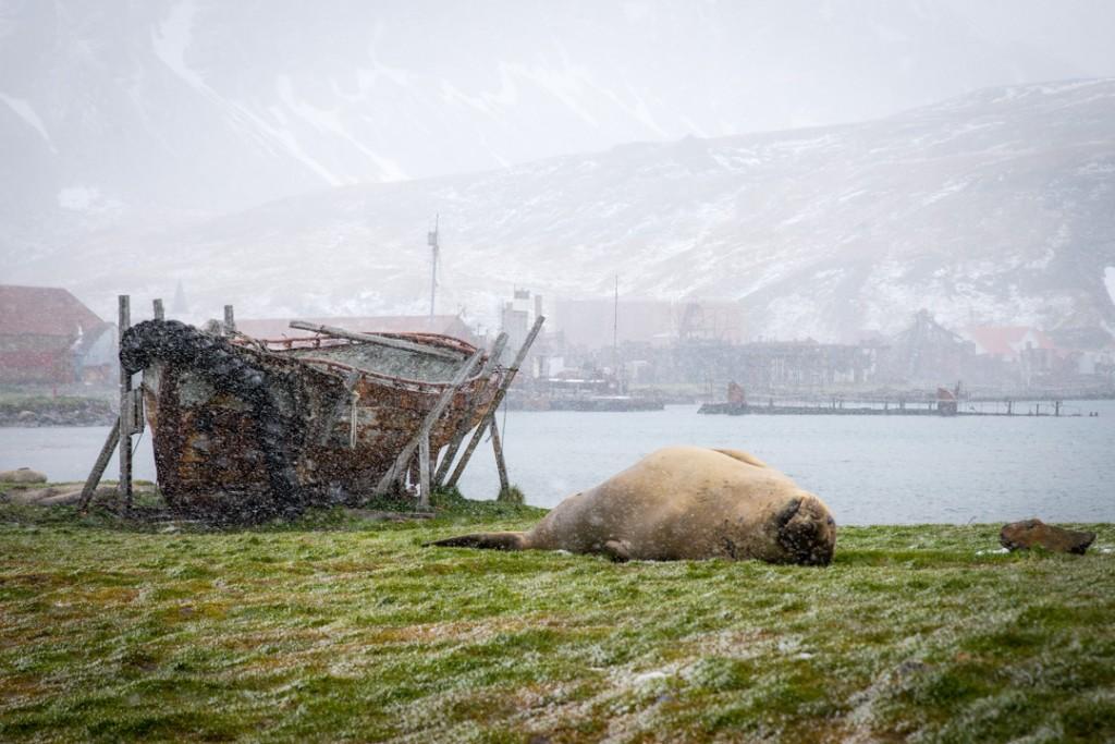 Grytviken, ein Ort zum Entspannen