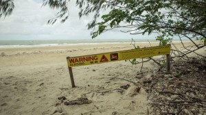 Der Strand beim Cape Tribulation