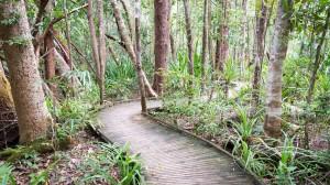 Einer der unzähligen Wege durch den Daintree National Park