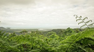 Blick auf den verregneten Daintree National Park