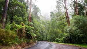 Die Strasse durch den Regenwald